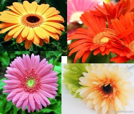 fresh cut flower