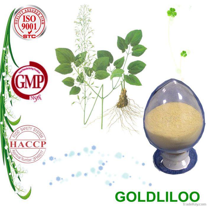 Top Quality Epimedium Extract Icariin with Competitive Price