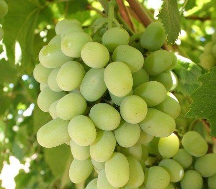 Grape, Fresh Grapes, Seedless Grapes, Green/Red/Purple/Black Grapes