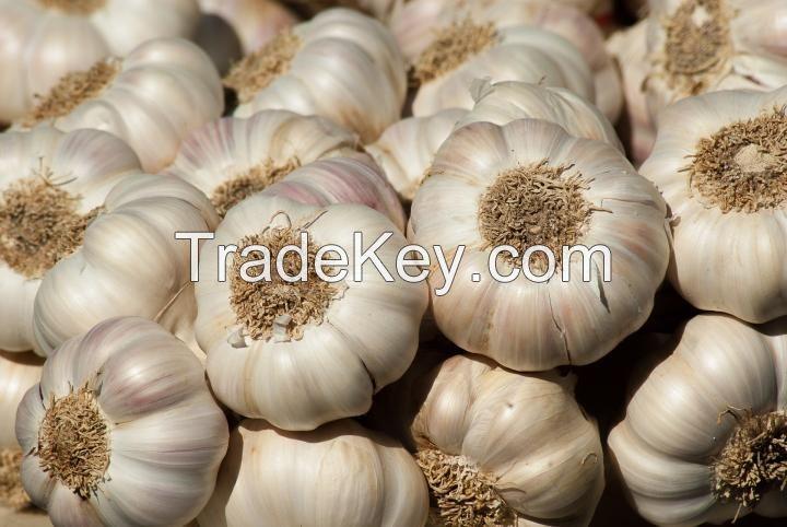 Garlic Fresh And Dried Garlic / Red Garlic Cheap Premium Quality 100%
