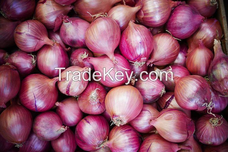 Fresh Onions Red White High Quality Onions