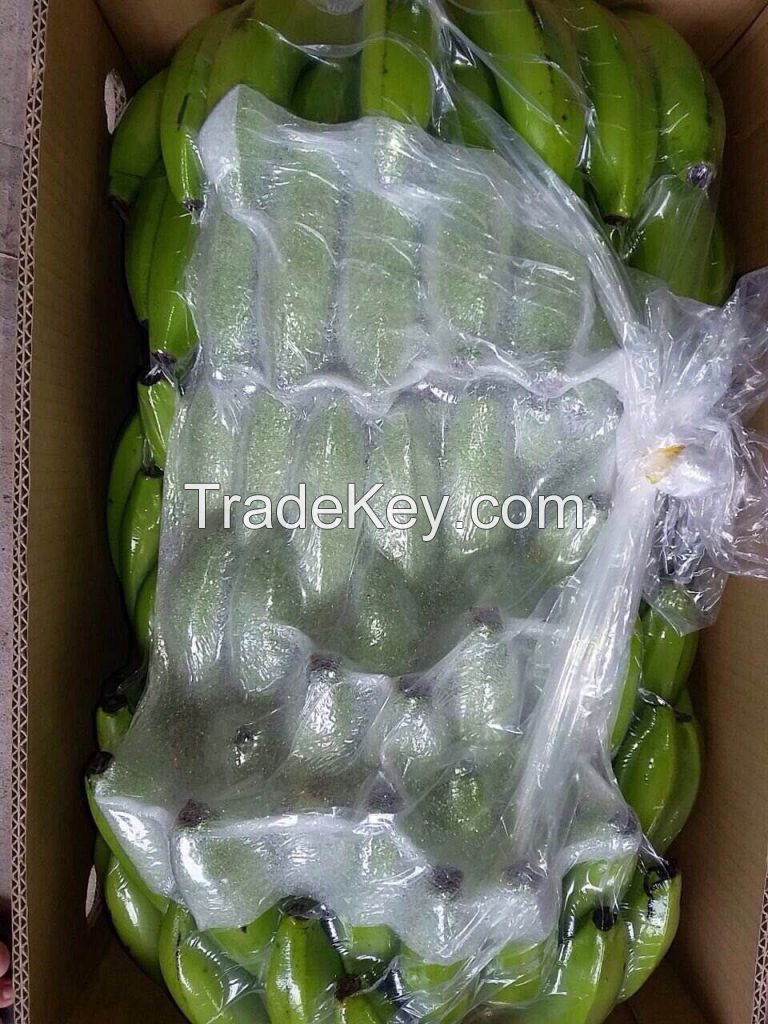 Wholesale price, fesh Cavendish Banana from Afica
