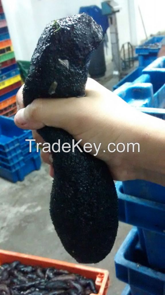 Peruvian Dried sea cucumber