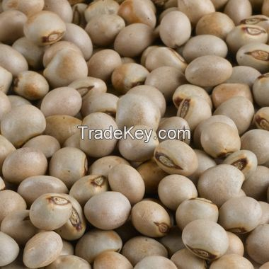 Grade A Pigeon Peas From South Africa