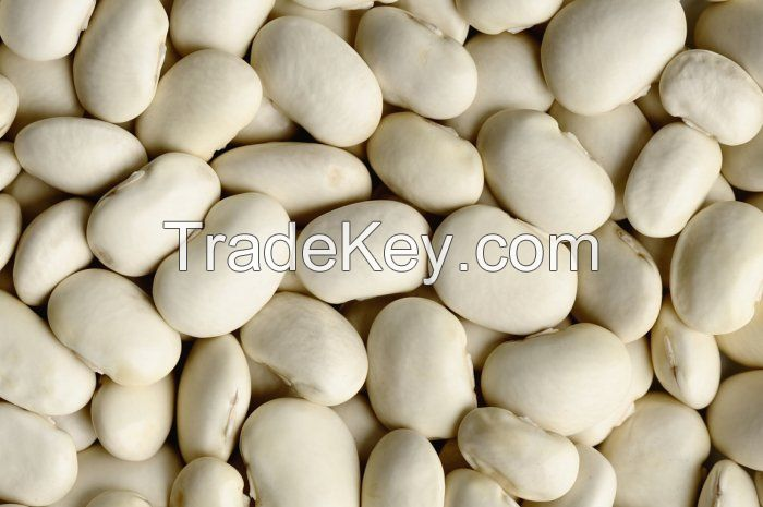White Navy Beans From South Africa