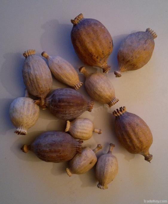 Dried Poppy Pods