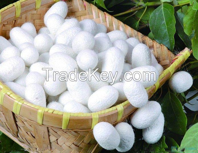 Skin care Vietnamese silk cocoon white natural silkworm cocoon