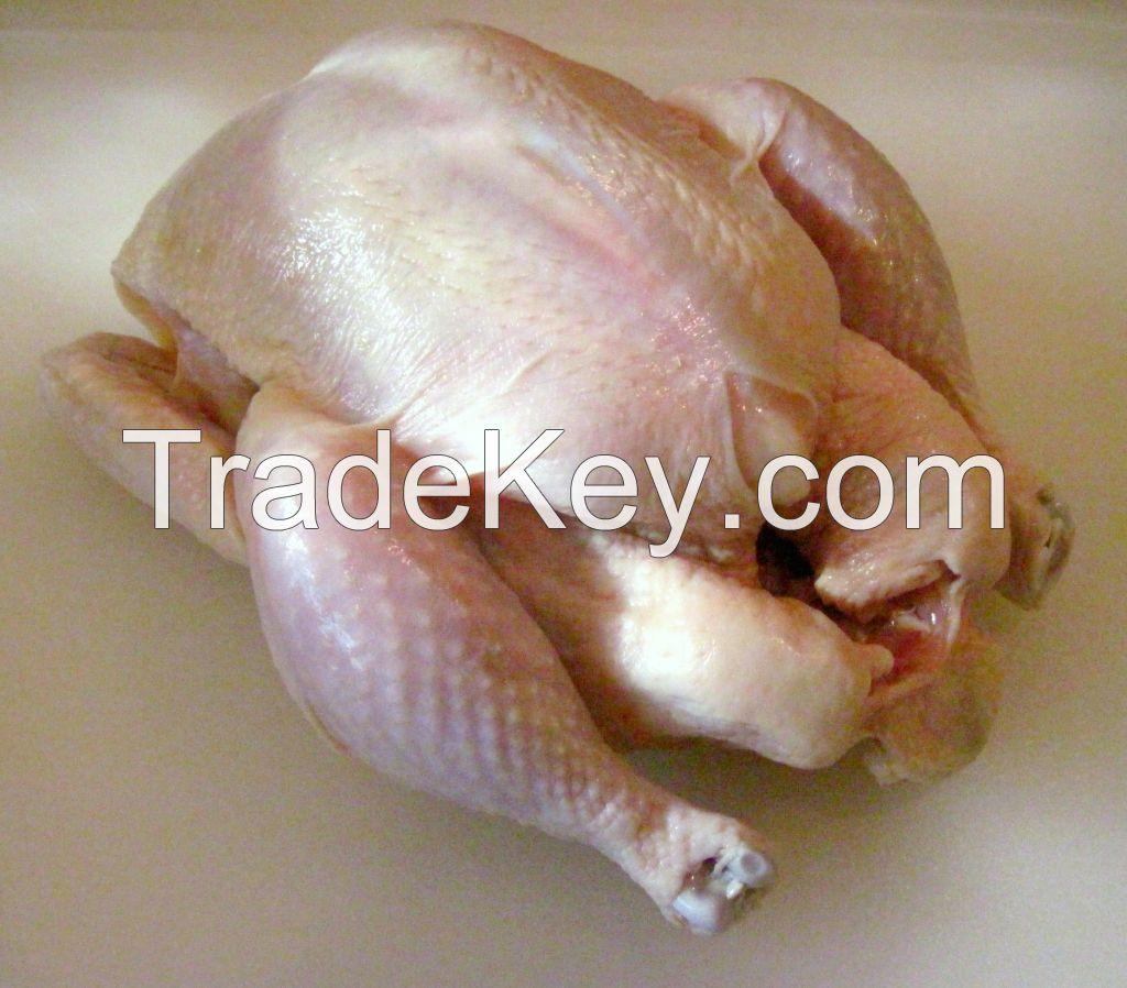 Frozen, Halal, Chicken Suppliers, Breast, Fillet, Leg, paw, Drumstick , Wings, Eggs, Fertile, Hatching egg suppliers