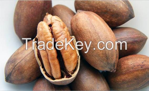 Pecan Western Nuts in Shell
