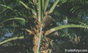 Greenyield Plantation Tools