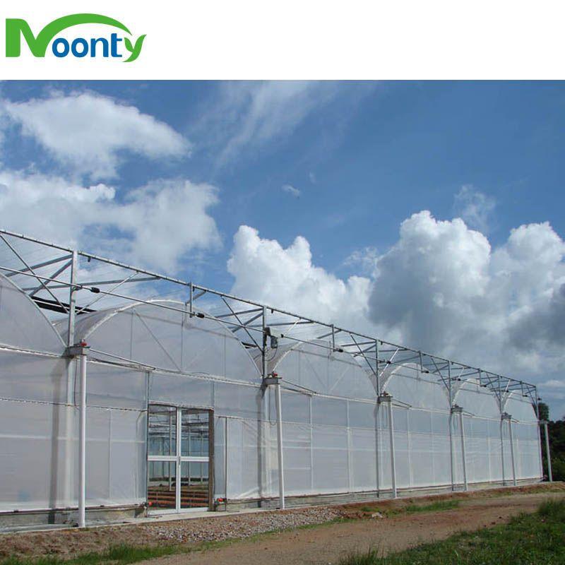 Multi span greenhouse for farm