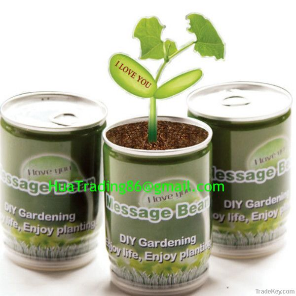 Cans plant, Message beans in Tins