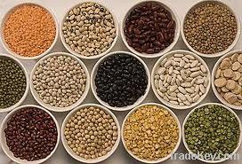 Kidney beans, Channa Dhal, Sorghum, Mung bean, Chickpeas, Lentils