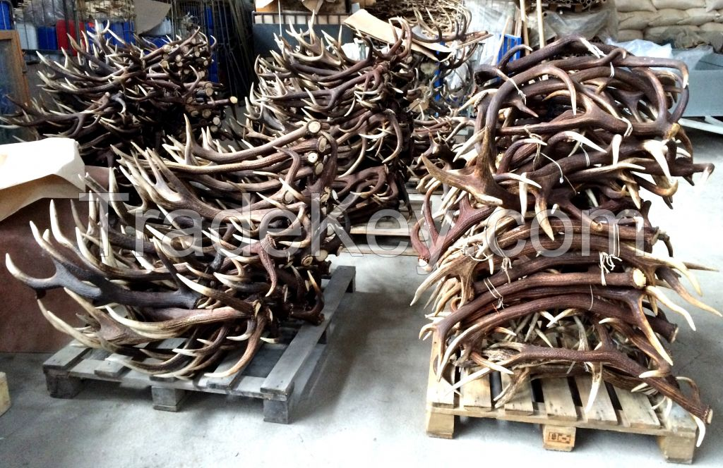Red Deer Antlers Wholesale A B C Grade Natural Real
