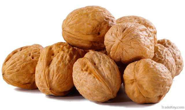 Walnut Kernels | Dried Fruits | Walnut Suppliers | Walnut Exporters | Walnut Manufacturers | Cheap Walnut | Wholesale Walnut | Discounted Walnut | Bulk Walnut | Walnut Buyer | Import Walnut | Shelled Walnuts