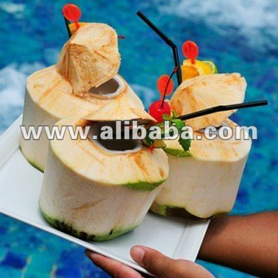 fresh young coconut importers,fresh young coconut buyers,fresh young coconut importer,buy fresh young coconut,fresh young coconut buyer,