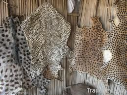 Animal Skins / Hides