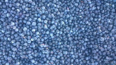 Blueberry frozen