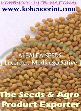Alfalfa Seeds  ( Lucerne , Medicago Sativa ), Sesbania Seeds