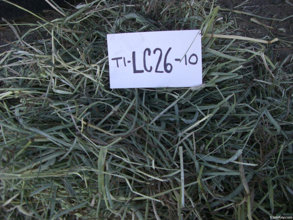 Timothy Grass Hay