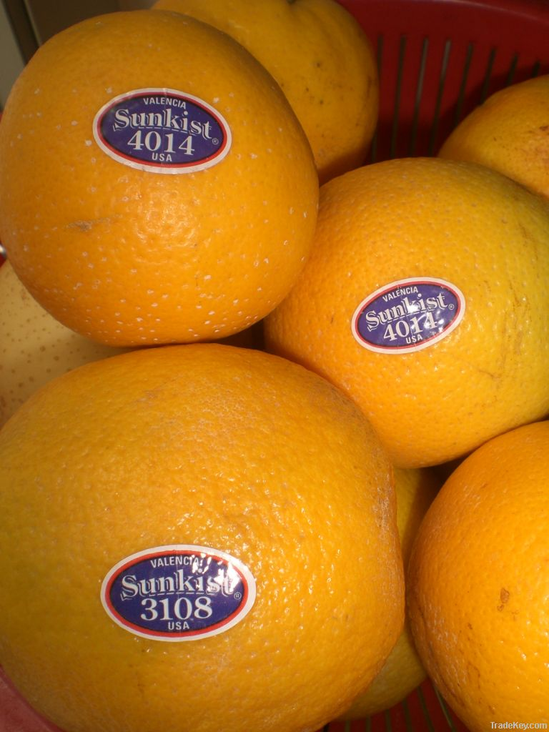 Fresh Oranges (Valencia And Navel)