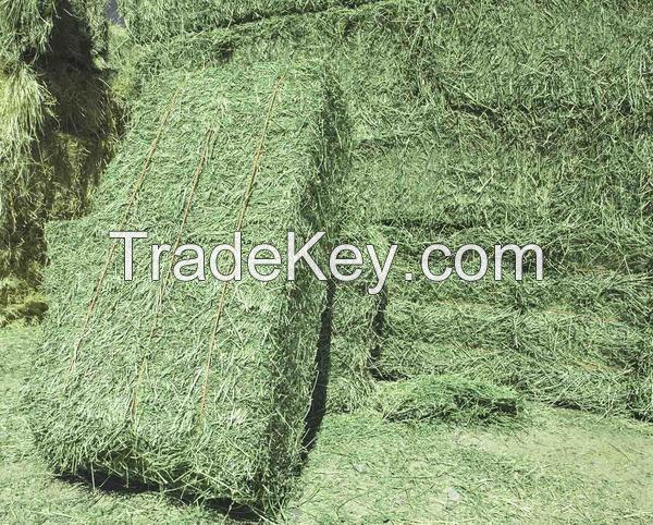 Alfafa Hay,Alfalfa hay with high protein for animal feeding
