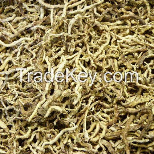 earthworms, Dried earthworms