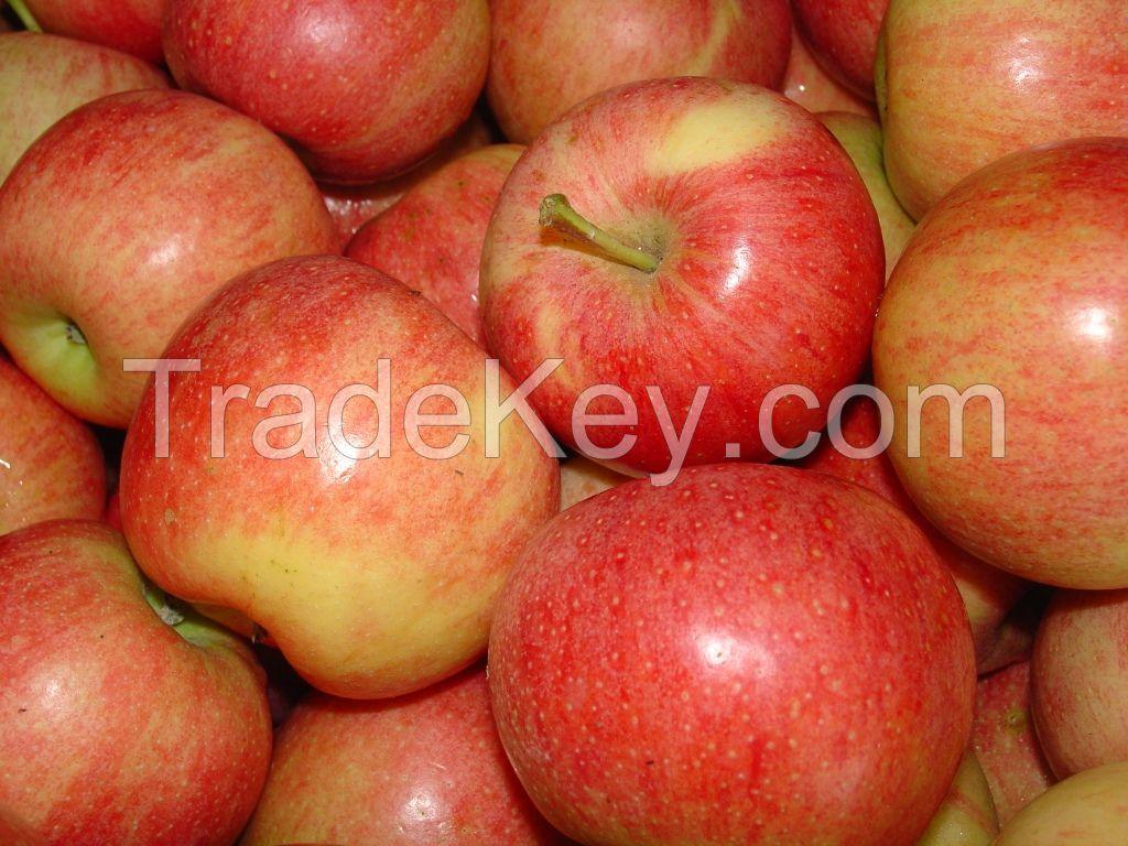 Fresh grapes/Fresh avocados/Fresh Mangoes/fresh apples/cavendish bananas
