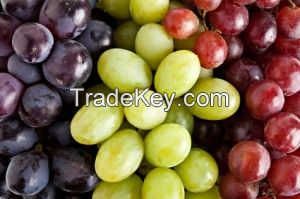 Fresh grapes/Fresh avocados/Fresh Mangoes/fresh apples/cavendish bananas