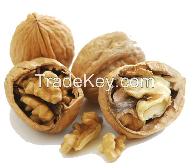 Walnuts and walnuts kernels