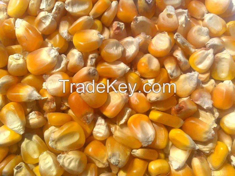 Chickpeas, Kidney Beans, Lentils, Yellow corn, White Corn, Pop Corn, Barley Grain, Wheat Grain