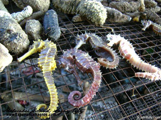 Dried Sea Horse / Cucumber
