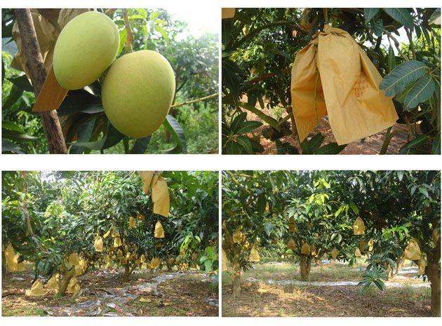 Mango Grape Apple Pear orange peach  bag machine