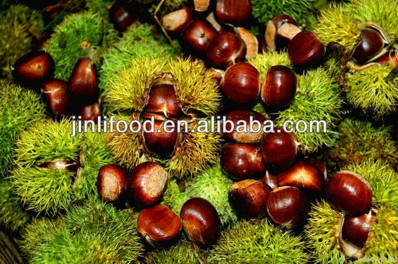 wholesale bulk nuts dry chestnuts chinese good