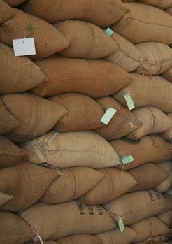 Export Coffee Beans | Coffee Bean Importer | Coffee Beans Buyer | Buy Coffee Beans | Coffee Bean Wholesaler | Coffee Bean Manufacturer | Best Coffee Bean Exporter | Low Price Coffee Beans | Best Quality Coffee Bean | Coffee Bean Supplier | Sell Coffee Be