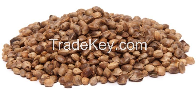 Finest quality Hemp seed