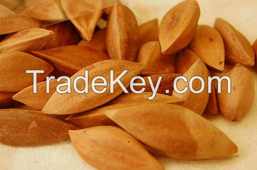 Quality Pili Nuts