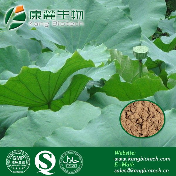 Loss weight ingredients lotus leaf extract nuciferine