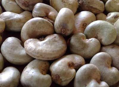Cashew Nut Suppliers | Cashew Nut Exporters | Cashew Nut Manufacturers | Cheap Cashew Nut | Wholesale Cashew Nut | Discounted Cashew Nut | Bulk Cashew Nut | Cashew Nut Buyer | Import Cashew Nut | Cashew Nut Importers