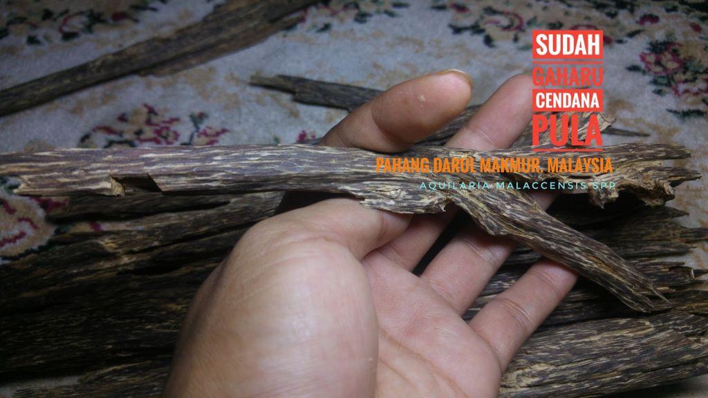 Wild Harvested Agarwood