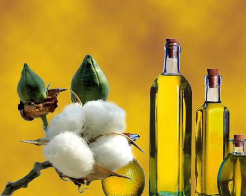 pure natural cotton seed oil