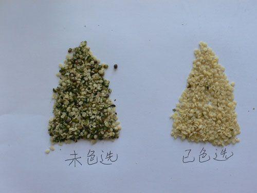 hemp seeds kernell