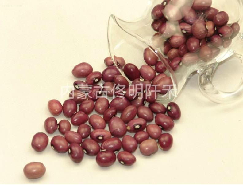 round pearl kidney bean