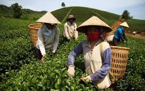 Vina Manpower -The leading Manpower Supplier from Vietnam