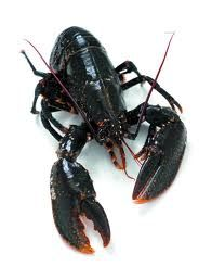 Canadian  Lobsters
