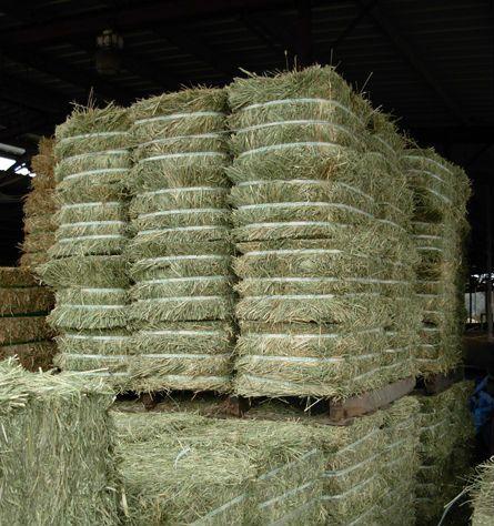 High Protein Sun Dried Alfalfa Hay in Turkey
