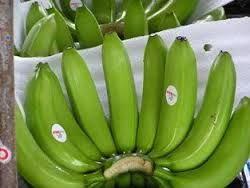 quality fresh green cavendish banana