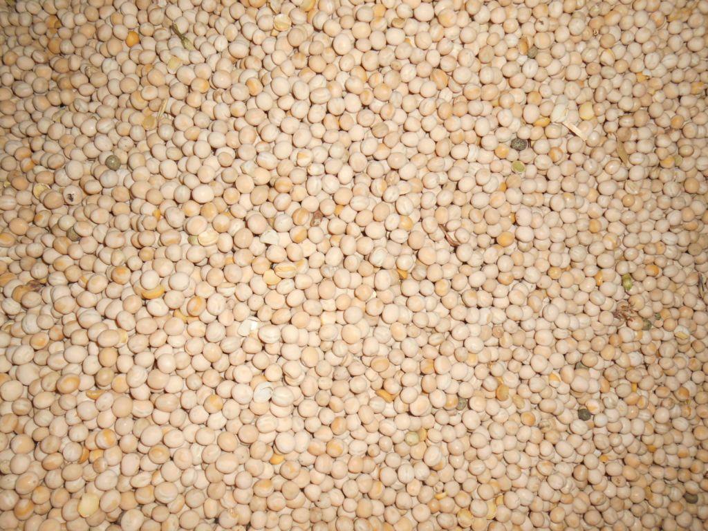 Yellow peas bulk in 20-foot containers. Origin Russia.