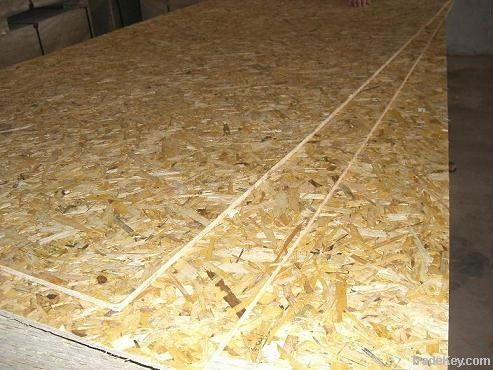 sell 6-40mm OSB boards