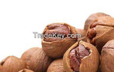 Pecan nuts Kernal/ pecans price